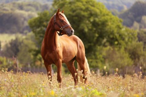 écurie équitation