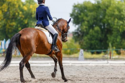 Vente chevaux